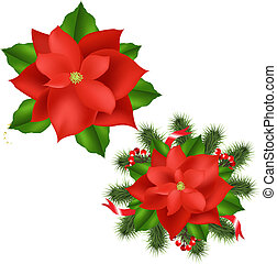 Poinsettia - 2 Poinsettia, Isolated On White Background,...