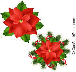Poinsettia - 2 Poinsettia, Isolated On White Background,...