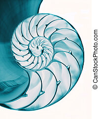 Chambered nautilus shell interior - Nautilus shell interior...