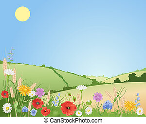 summer wildflowers - an illustration of summer wildflowers...
