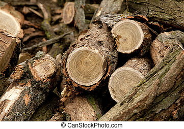 Woods after sawing