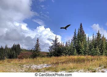 Soaring eagle with scenery - Bald eagle soars over Alaskan...