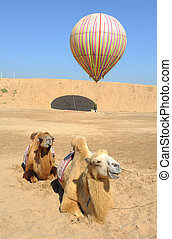 balloon with camel in desert