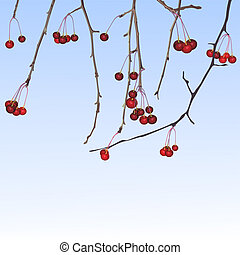 Winter small apples Illustration in vector format EPS
