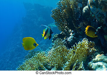 Coral and fish - underwater landscape coral reef and...