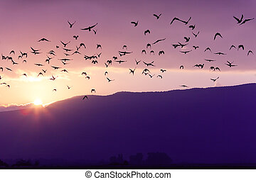 Flock of Birds Flying at the Sunset above Mountian in Golan...