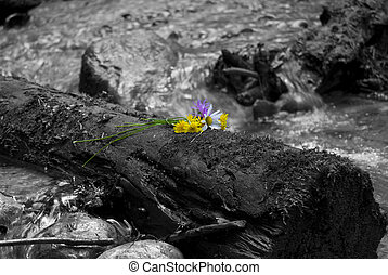 desaturated - spring river in Carpathian Mountains