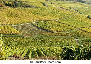 alsacian vineyards - in the alsacian vineyards in autumn in...