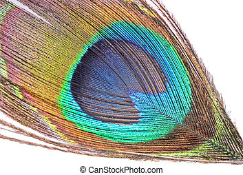 Peacock feather - The abstract color background - peacock...