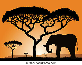 Savannah - elephant. Dawn in the African savanna....