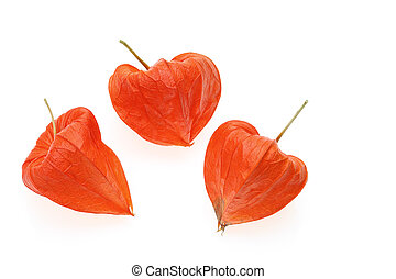 physalis - fresh physalis on white background