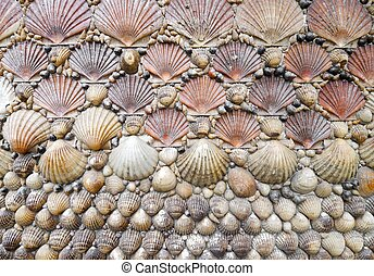 shells - background created  with a group of shells  aligned