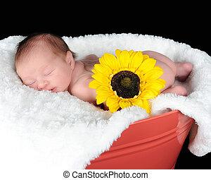 dulce, recién nacido, sueño,...