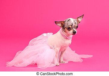 balerina,  chihuahua, kutya