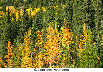 Fall colors in Banff National Park