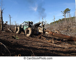 Yarding Logs - A logging skidder works in a pine forest.