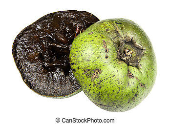 Black Sapote - Black sapote or chocolate pudding fruit also...