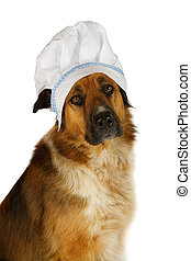Big dog with a chef´s hat