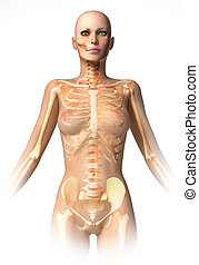Woman body, with bone skeleton superimposed. With clipping...