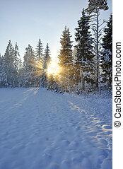 Sunbeams trough the tree in winter
