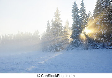 Sunbeams trough the tree in winter