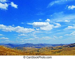 landscape of yellow field