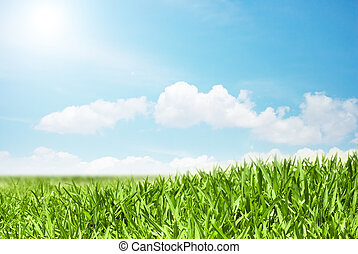 view of green field and blue sky - Green field and blue sky...