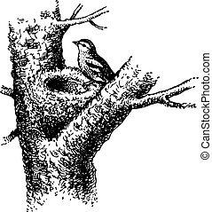 Bird's nest on the tree and bird on it