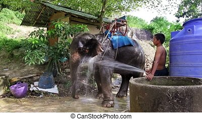 elephant and driver