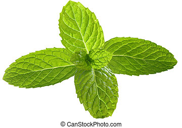 Mint Leaf - Fresh mint leaves for garnish isolated on white