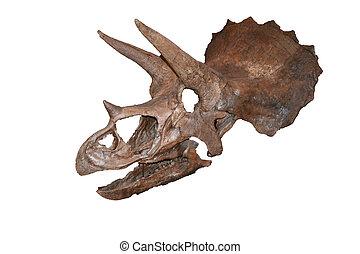dinosaur bones featuring skull