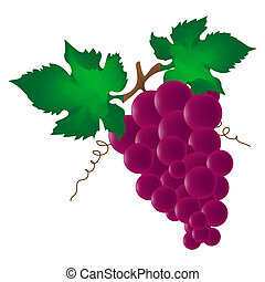 red wine grape isolated on white background