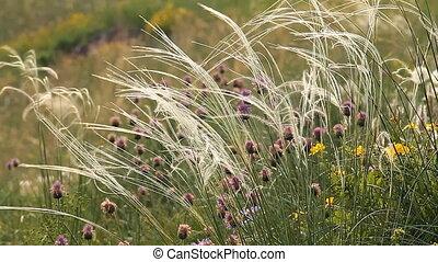 Wild Grass 2