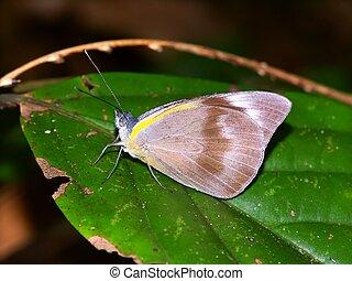 Tropical Rainforest Butterfly - Queensland