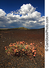 Flowers in Volcanic Landscape - Flowers colonize a rocky...