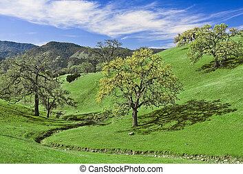 Oak Glade - Green hills and oak trees in California wine...