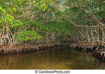 Dense Red Mangroves in Caribbean