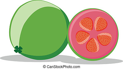 guava - illustration of guava