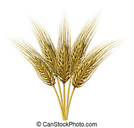 Wheat design on a white background as a group of growing...