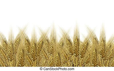 trigo, cosecha, horizonte