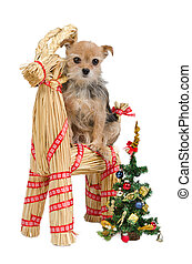 Dog on Santa's straw raindeer - Dog is waiting for Christmas...