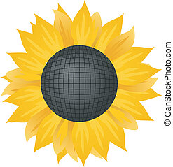 Vector illustration of a sunflower.