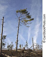 Damaged Pine