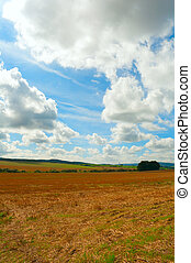 Harvested Field - Rural Landscape - Harvested Agricultural...