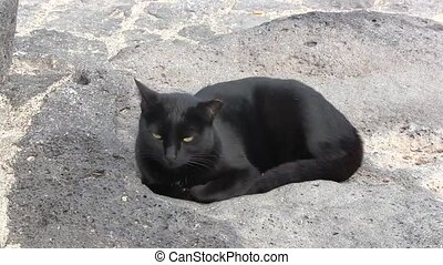 Black cat resting on a path.
