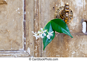 Jasmine flower inside an old door lock