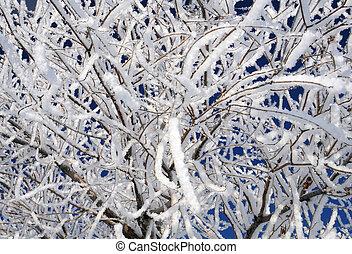 Closeup Snowy Twigs