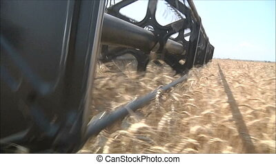 harvesting wheat 4