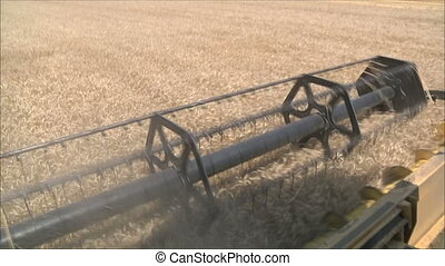 harvesting wheat 1 - harvesting wheat