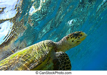 sea turtle - peery looking turtle
